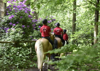 horsehacking5